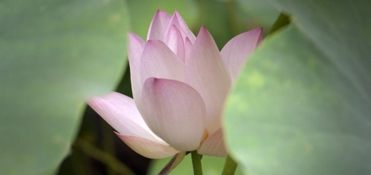 Anahata, le chakra du coeur